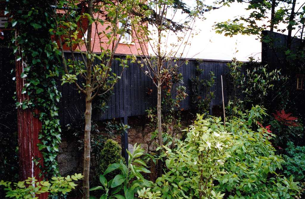 timber-fence-fencing-painted-work-screening-garden-planting-drainage-landscaper-landscaping-company-landscape-gardener-trees-south-london